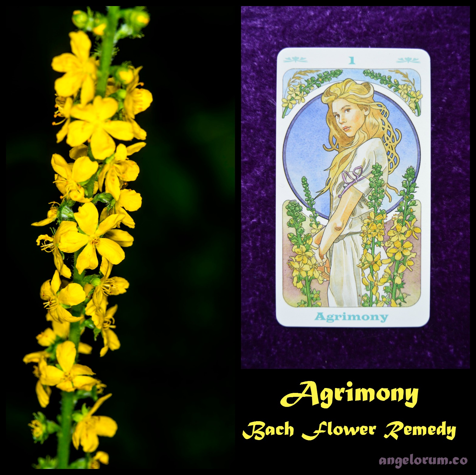 Bach Flower Remedies Archives Angelorum Tarot And Healing