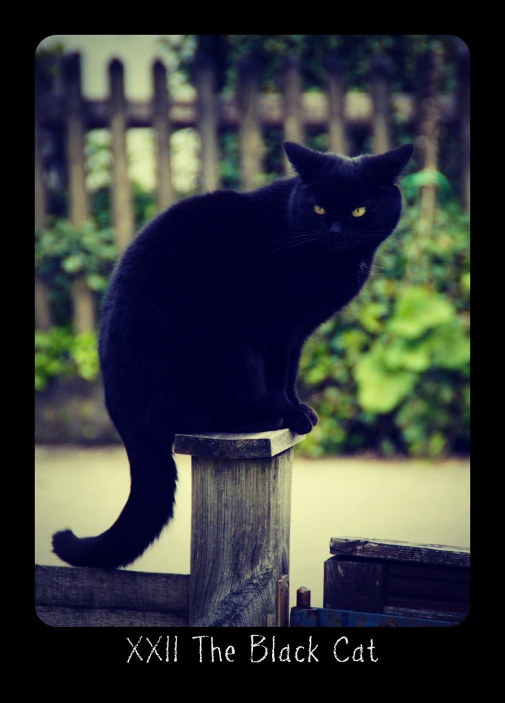 Holistic Tarot card meanings and correspondences for The Black Cat