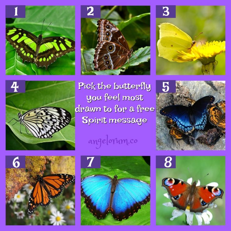 Pick a Butterfly for a FREE message from Spirit