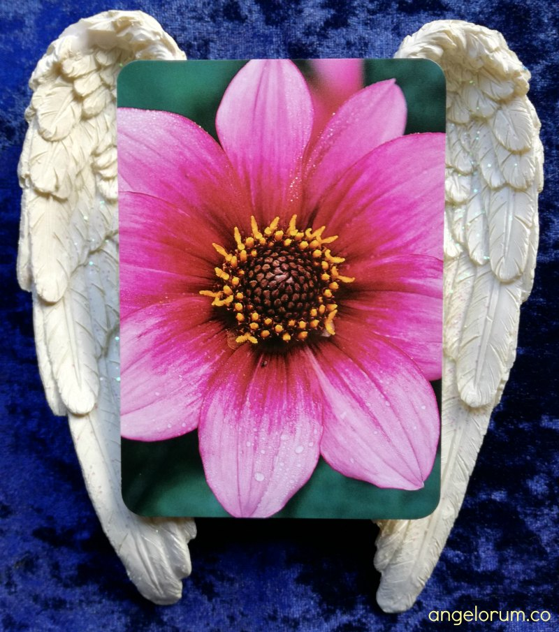 Camelia from the Flower Spirit Cards