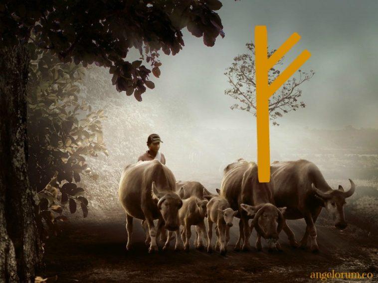Fehu Rune Prosperity Tarot Spread